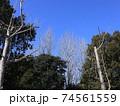 西神中央公園  神戸市 西区 公園 冬 74561559