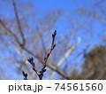 西神中央公園  神戸市 西区 公園 冬 74561560