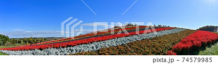青空バックにカラフルな花々が咲く丘のパノラマ情景@富良野、北海道 74579985
