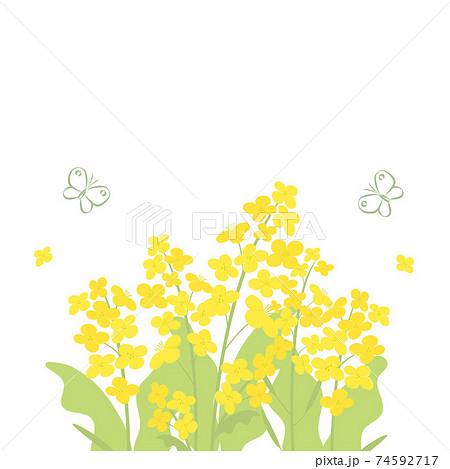 菜の花と蝶の背景イラスト 74592717