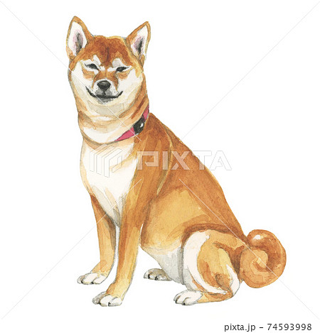 微笑む柴犬 【手描き水彩画】  74593998