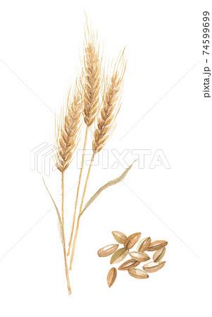 麦と麦芽 74599699