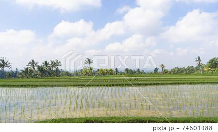 インドネシア・バリ島 広大な水田のある景色 74601088