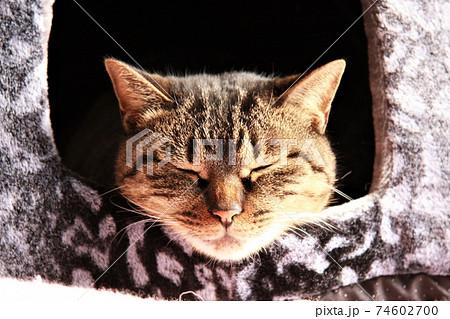 陽だまりの中ペットハウスから顔を出して眠る猫 74602700