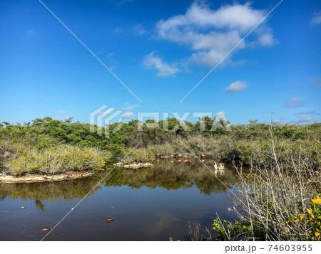 イサベラ島の自然(ガラパゴス諸島) 74603955