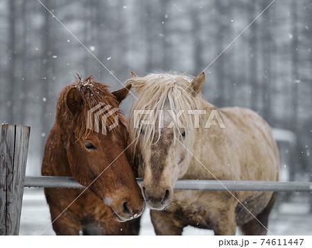 冬の道産子 74611447