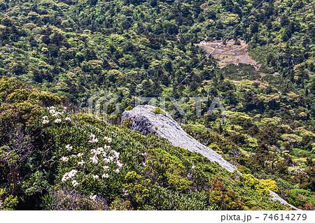 新緑の雲上の楽園花之江河の絶景。世界自然遺産屋久島 74614279