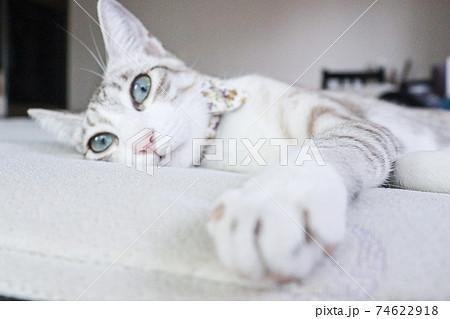 眠たいながらも手を伸ばしかまってほしい猫 74622918