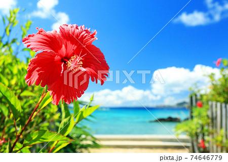 沖縄の青い海と青い空と真っ赤なハイビスカス 74646779