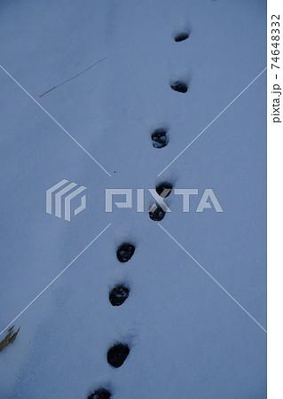 冬の日の朝積もった雪に点々と続く猫の足跡 74648332