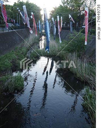 夕暮れの小川の上になびき、小川に写る鯉のぼり 74649736