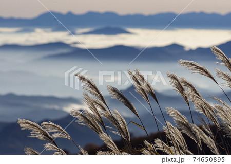鳥海山から望む朝焼けの雲海とススキ 74650895
