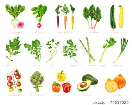 水彩イラスト 野菜セット 74657020