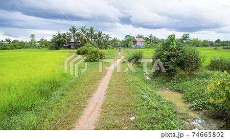カンボジア・シェムリアップ 田舎の農道 74665802