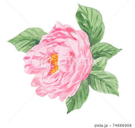 camellia21218pix8 74666908