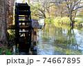 わさび園の水 74667895
