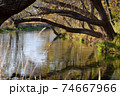 わさび園の川 74667966