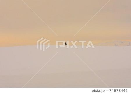 【北海道美瑛町の冬】淡い朝焼けの丘 1月 74678442