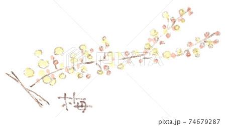 梅の花(水彩イラスト) 74679287