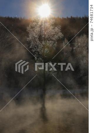 【北海道富良野の冬】朝日と毛嵐と霧氷 1月 74681734