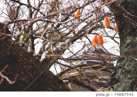 【長野県】木々の間から見る松本城 74687542