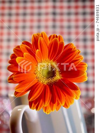 ガーベラ・オレンジ色 欧米風・チェック柄背景 74689831