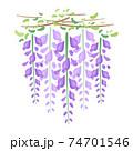 藤の花のカットイラスト 74701546
