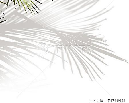 植物の影のイメージ素材- 複数のバリエーションがあります 74716441