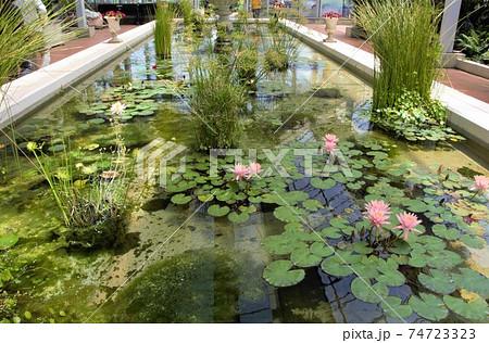 イングリッシュガーデン内の池のハス 74723323