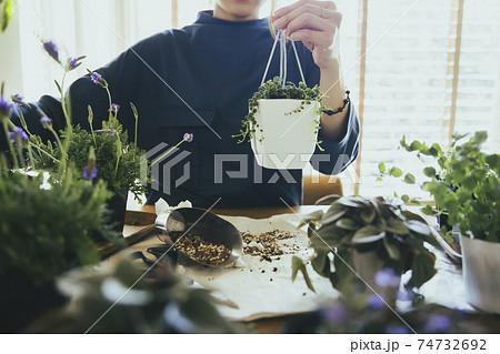 観葉植物のグリーンネックレスを植える女性 74732692