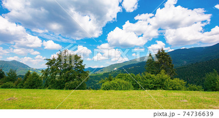 summer landscape in carpathian mountains. beautiful nature scenery with trees on the grassy meadow. fluffy clouds on the bright blue sky. wonderful travel destination of ukraine 74736639
