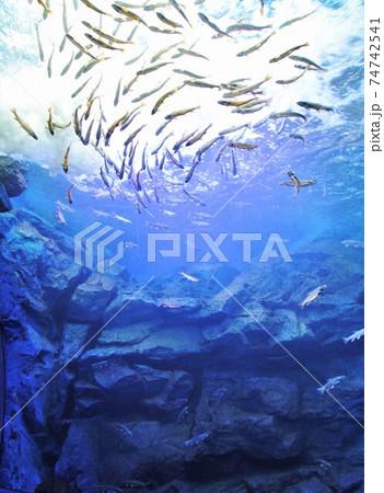 北の大地の水族館・滝つぼ水槽(北海道北見市留辺蘂町) 74742541