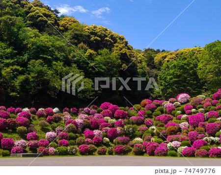 京都の春 蹴上浄水場の満開のつつじと青空 74749776