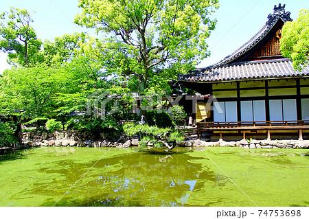 【大阪】初夏の住吉大社 石舞台前の池に佇むアオサギと神館 74753698