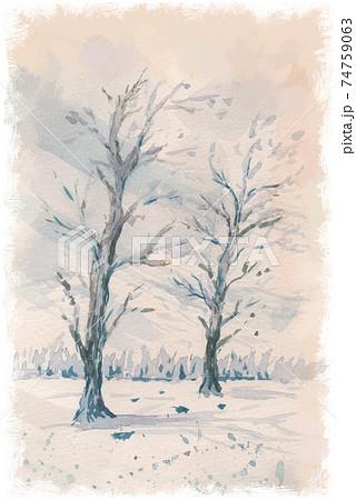雪原の樹木(ハルニレ) 74759063