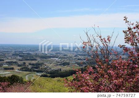 青空の下 愛宕山の八重桜と眼下に関東平野の眺望 74759727