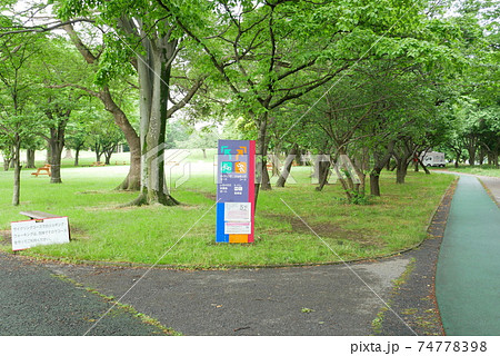 初夏の久喜菖蒲公園 ジョギングコース 74778398