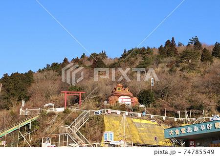 筑波山登山口、おたつ石コースのガマガエル 74785549