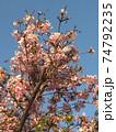 ブルーミング 開花 咲く 74792235