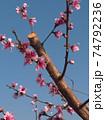 花 フラワー お花 74792236
