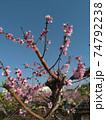 花 フラワー お花 74792238