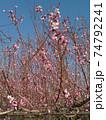 花 フラワー お花 74792241