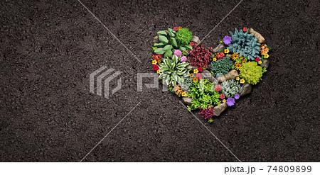 Gardening Hobby 74809899