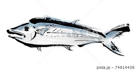 サワラという魚の和風手描きイラスト素材 74814436
