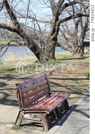 冬の公園にひそかに置かれたベンチ 74824852