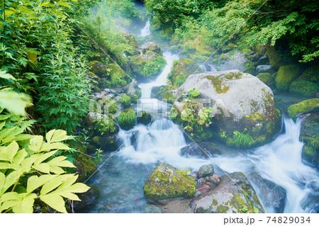 夏の森 みずみずしい早朝の森の渓流 74829034