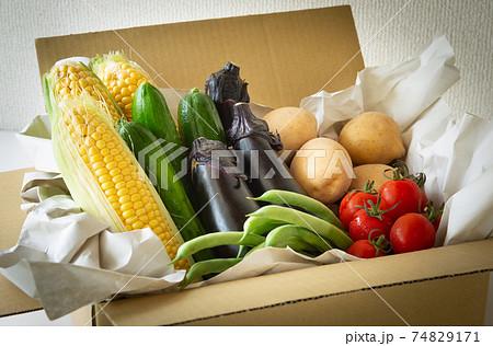 夏野菜いろいろ 契約農家から届いた宅配野菜 収穫した夏野菜 74829171