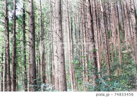 飯能市の手入れの行き届いた山、木々 74833456