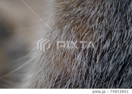 動物の毛 74853601