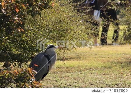公園を散策する生徒とそれを眺めるサギ 74857809